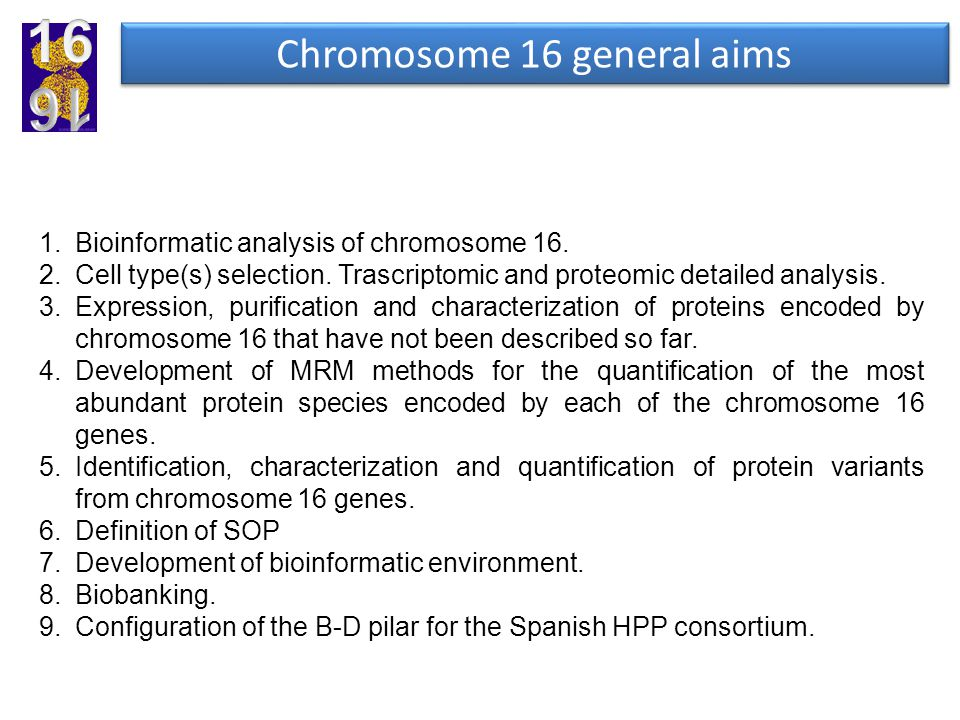 1.Bioinformatic analysis of chromosome 16. 2.Cell type(s) selection. Trascriptomic and proteomic detailed analysis. 3.Expression, purification and cha