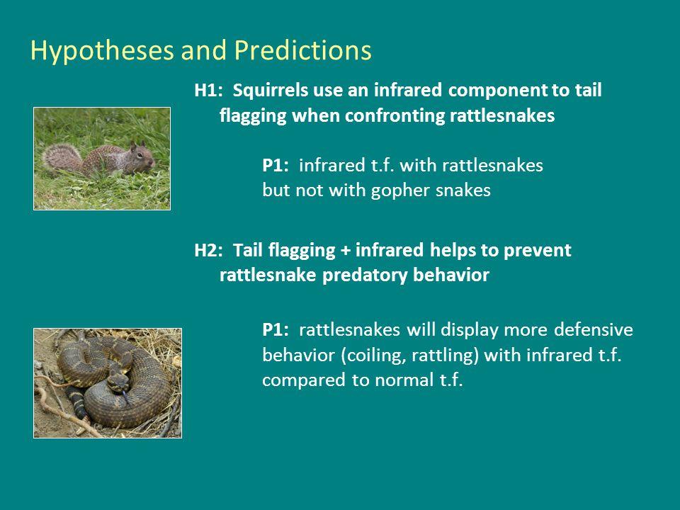 Methods + heated tail - heated tail rattlesnake gopher snake