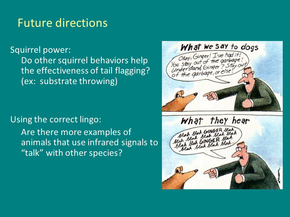 Future directions Squirrel power: Do other squirrel behaviors help the effectiveness of tail flagging.