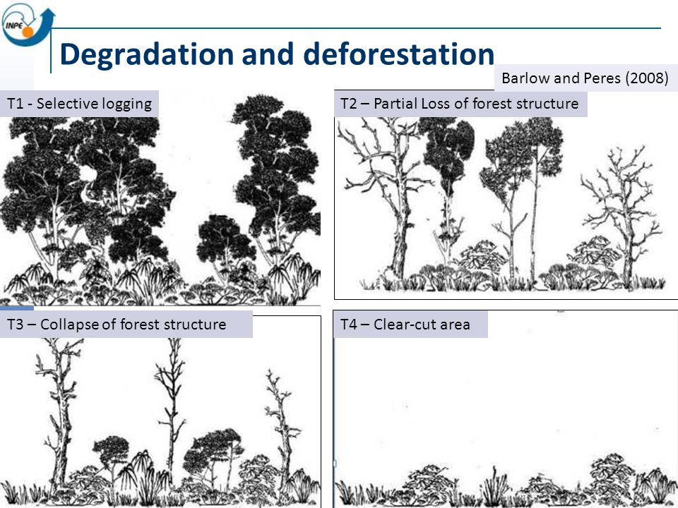 Degradation and deforestation T2 – Partial Loss of forest structureT1 - Selective logging T3 – Collapse of forest structure Barlow and Peres (2008) T4 – Clear-cut area
