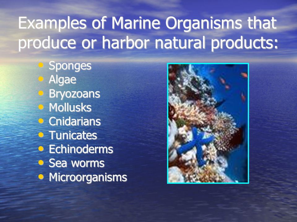 Examples of Marine Organisms that produce or harbor natural products: Sponges Sponges Algae Algae Bryozoans Bryozoans Mollusks Mollusks Cnidarians Cni