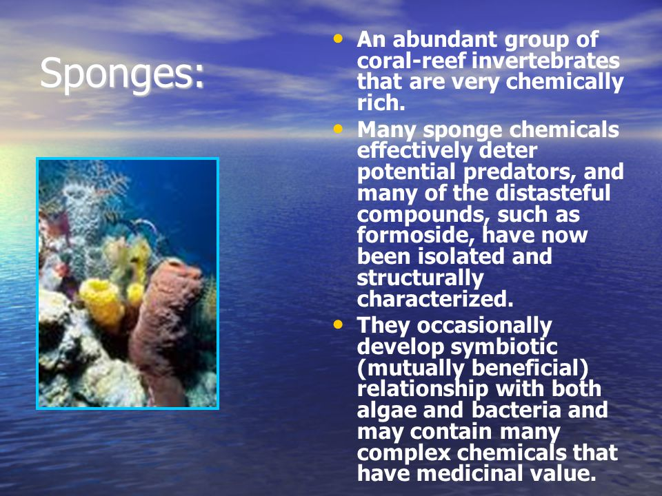 Sponges: An abundant group of coral-reef invertebrates that are very chemically rich. Many sponge chemicals effectively deter potential predators, and