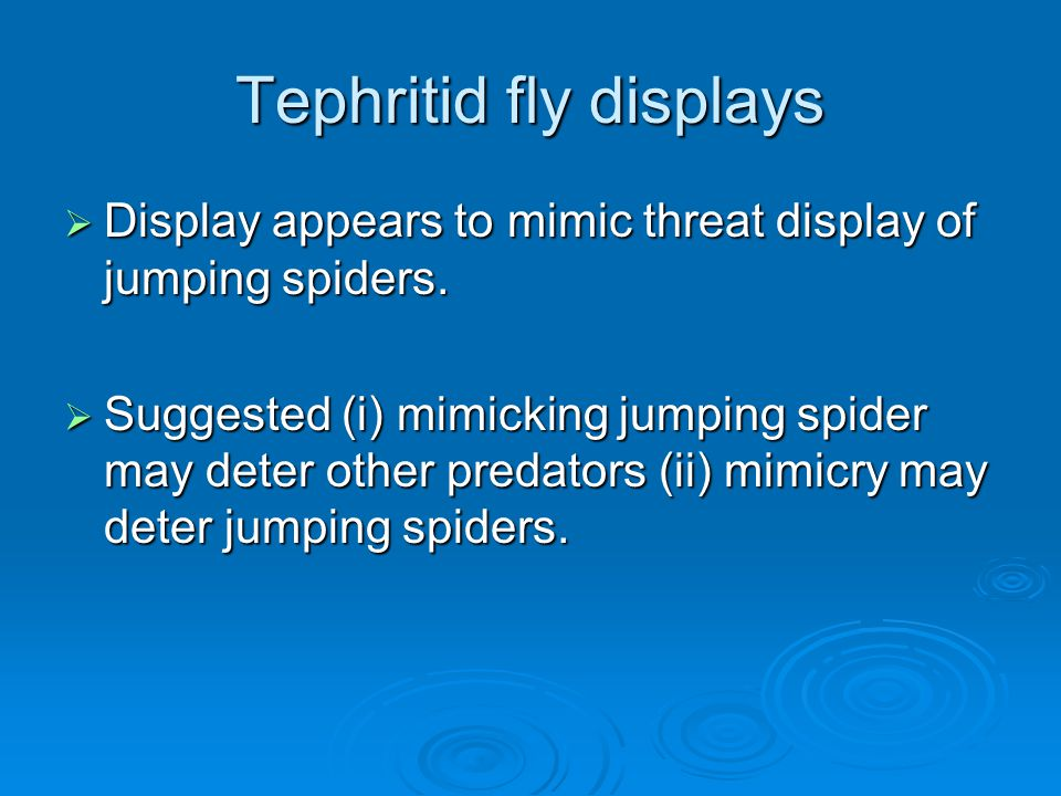 Tephritid fly displays  Display appears to mimic threat display of jumping spiders.  Suggested (i) mimicking jumping spider may deter other predator