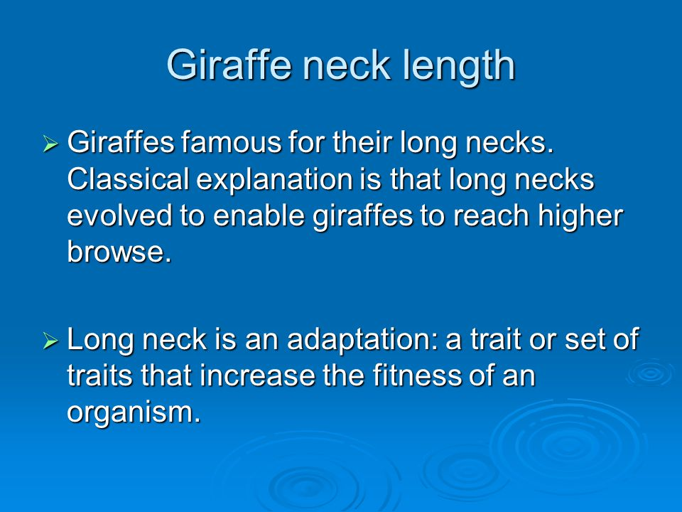 Giraffe neck length  Giraffes famous for their long necks. Classical explanation is that long necks evolved to enable giraffes to reach higher browse