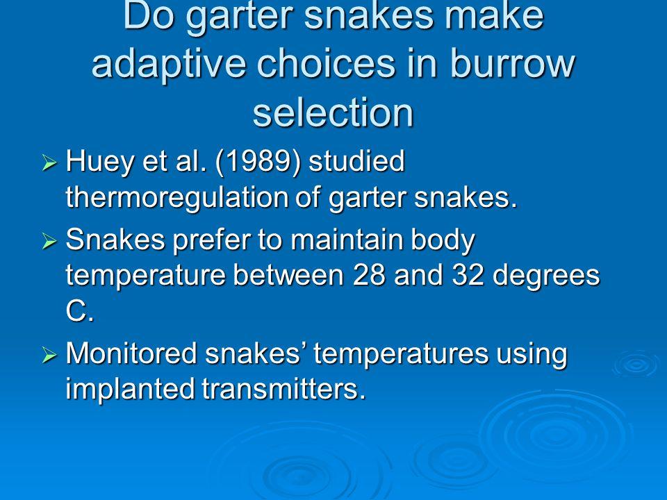Do garter snakes make adaptive choices in burrow selection  Huey et al.