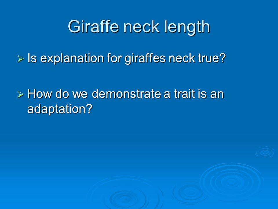 Giraffe neck length  Is explanation for giraffes neck true.