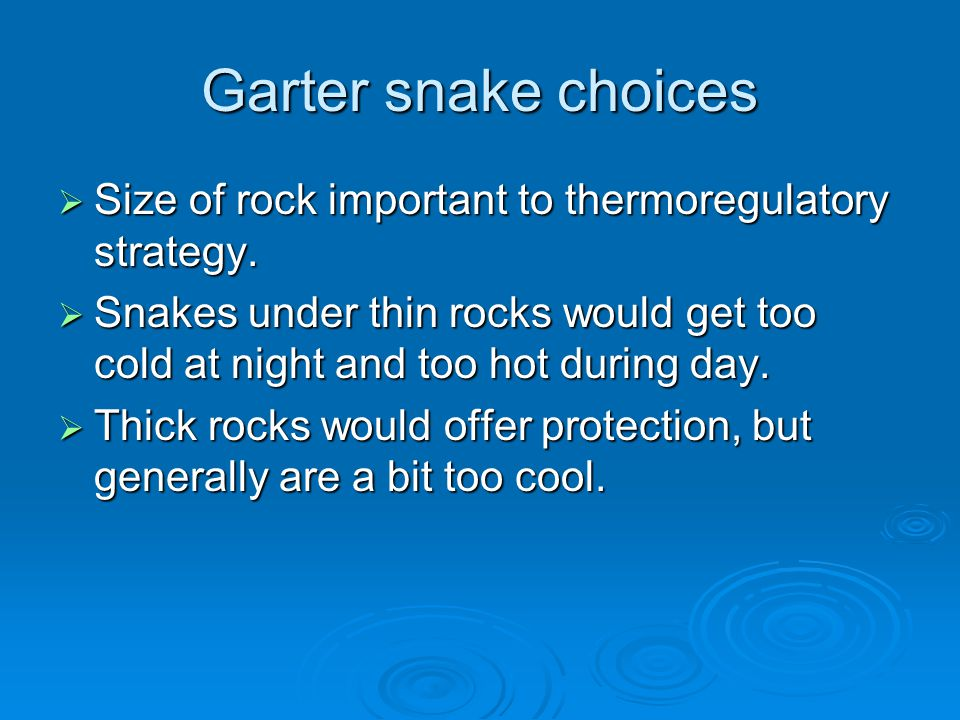 Garter snake choices  Size of rock important to thermoregulatory strategy.  Snakes under thin rocks would get too cold at night and too hot during d