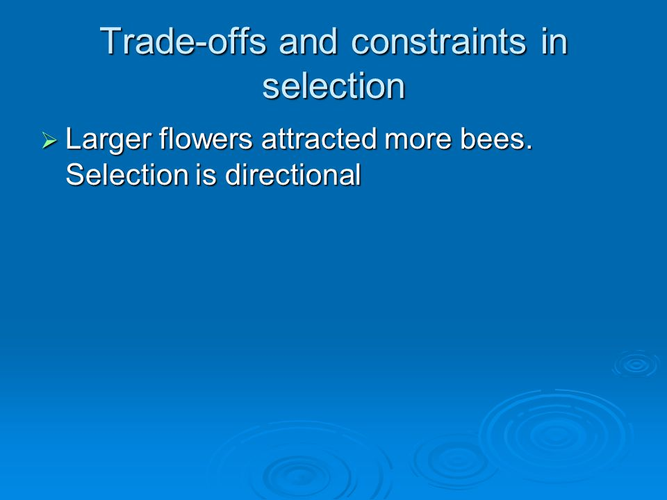 Trade-offs and constraints in selection  Larger flowers attracted more bees. Selection is directional