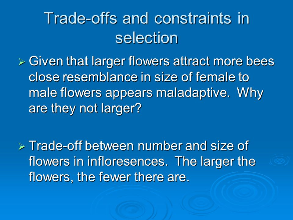 Trade-offs and constraints in selection  Given that larger flowers attract more bees close resemblance in size of female to male flowers appears maladaptive.