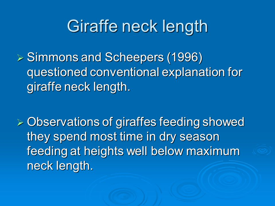 Giraffe neck length  Simmons and Scheepers (1996) questioned conventional explanation for giraffe neck length.  Observations of giraffes feeding sho