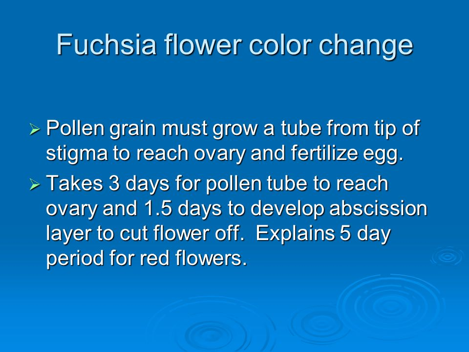 Fuchsia flower color change  Pollen grain must grow a tube from tip of stigma to reach ovary and fertilize egg.