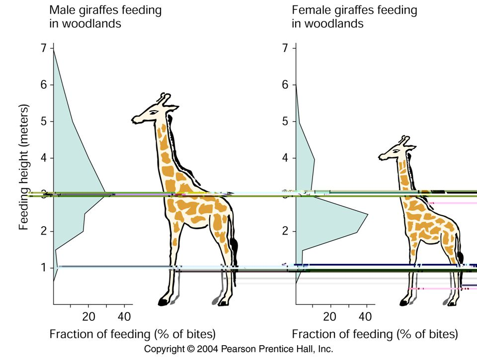 Giraffe neck length  Simmons and Scheepers alternative explanation: giraffes neck evolved as a weapon.