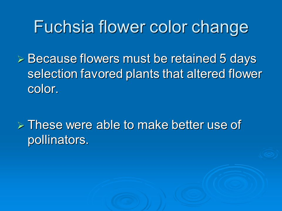 Fuchsia flower color change  Because flowers must be retained 5 days selection favored plants that altered flower color.  These were able to make be
