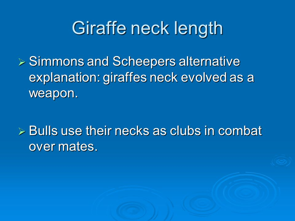 Giraffe neck length  Simmons and Scheepers alternative explanation: giraffes neck evolved as a weapon.  Bulls use their necks as clubs in combat ove