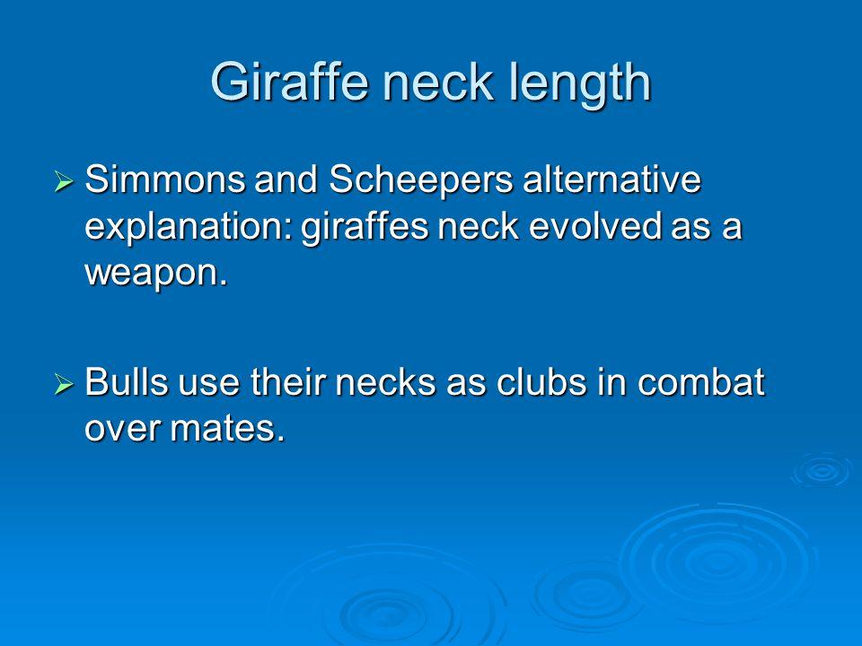 Giraffe neck length  Simmons and Scheepers alternative explanation: giraffes neck evolved as a weapon.