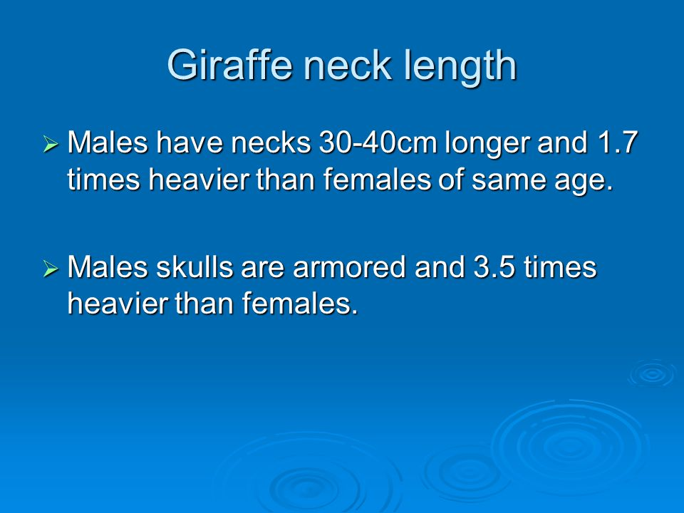 Giraffe neck length  Males with heavier necks consistently win in interactions with other males.