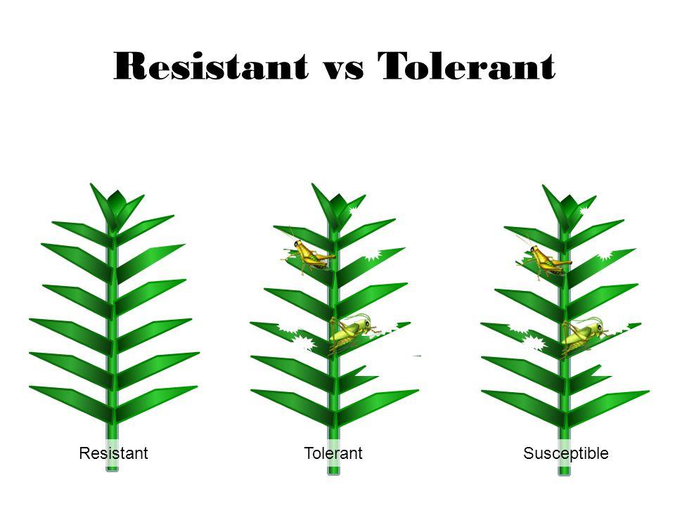 Resistant Tolerant Susceptible Resistant vs Tolerant
