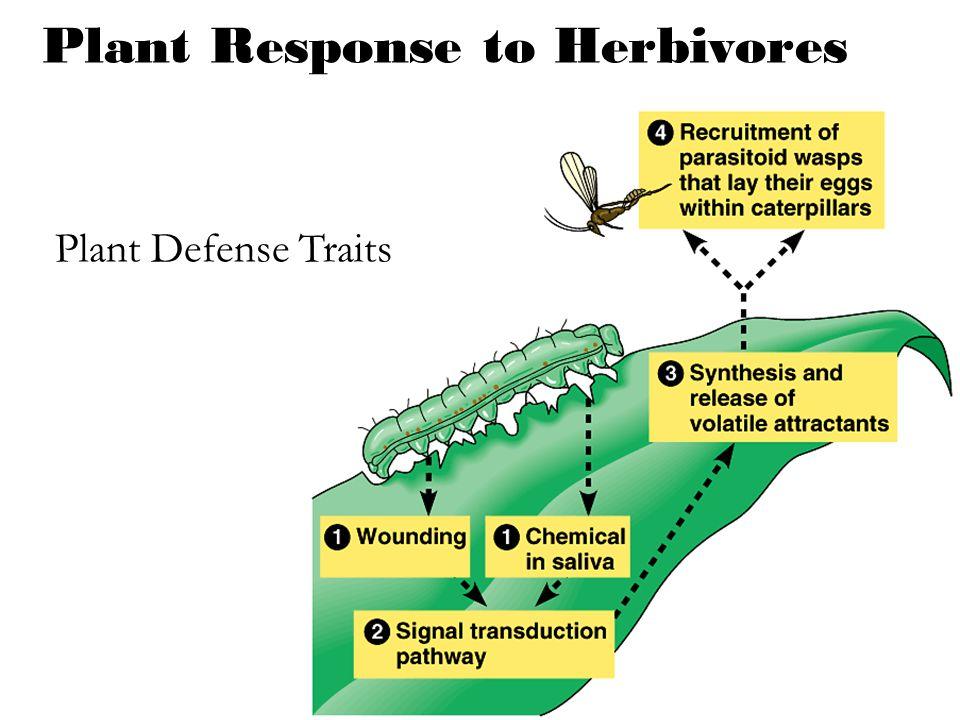 Plant Response to Herbivores Plant Defense Traits