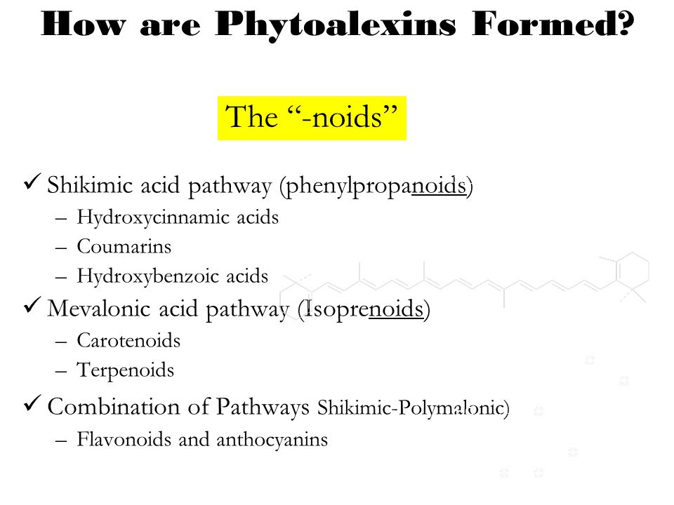 How are Phytoalexins Formed? Shikimic acid pathway (phenylpropanoids) –Hydroxycinnamic acids –Coumarins –Hydroxybenzoic acids Mevalonic acid pathway (