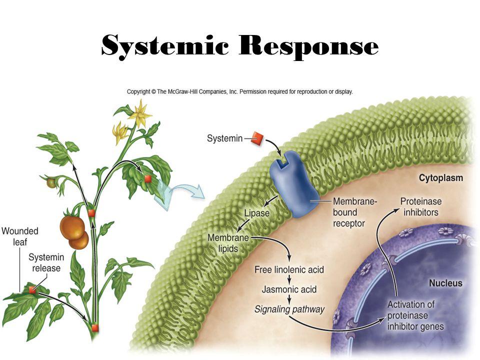 7 Systemic Response