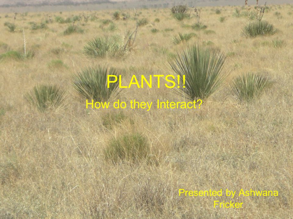 PLANTS!! Presented by Ashwana Fricker How do they Interact