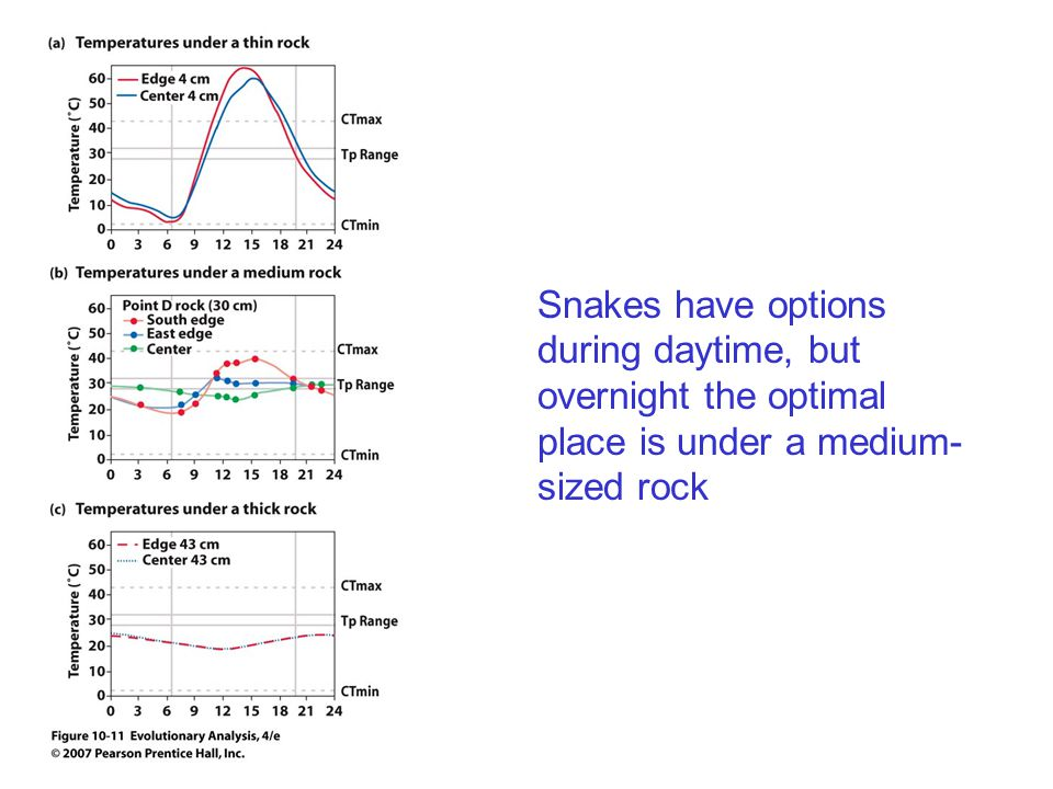 Snakes have options during daytime, but overnight the optimal place is under a medium- sized rock
