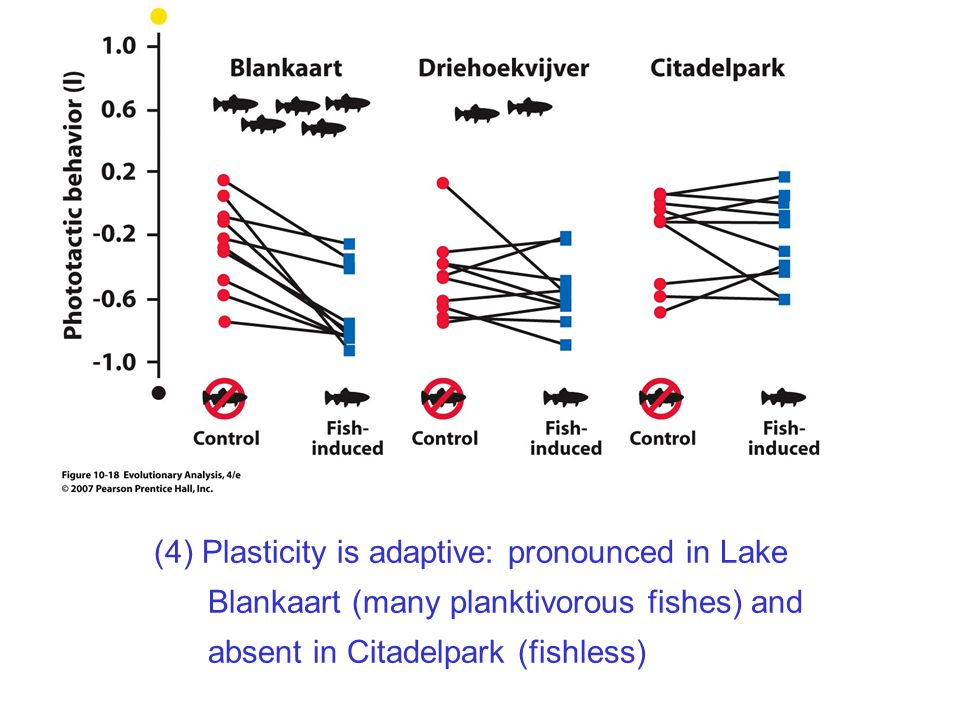 (4) Plasticity is adaptive: pronounced in Lake Blankaart (many planktivorous fishes) and absent in Citadelpark (fishless)