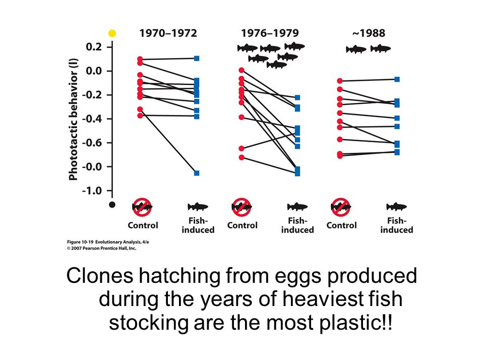 Clones hatching from eggs produced during the years of heaviest fish stocking are the most plastic!!