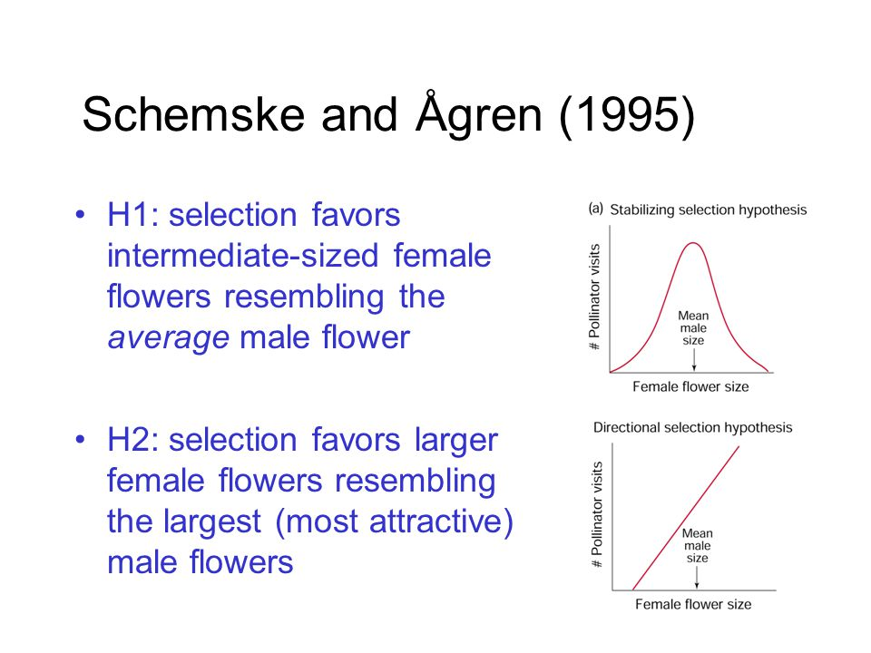 Schemske and Ågren (1995) H1: selection favors intermediate-sized female flowers resembling the average male flower H2: selection favors larger female flowers resembling the largest (most attractive) male flowers