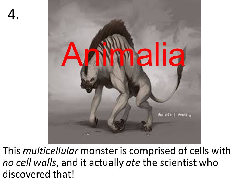 This multicellular monster is comprised of cells with no cell walls, and it actually ate the scientist who discovered that.