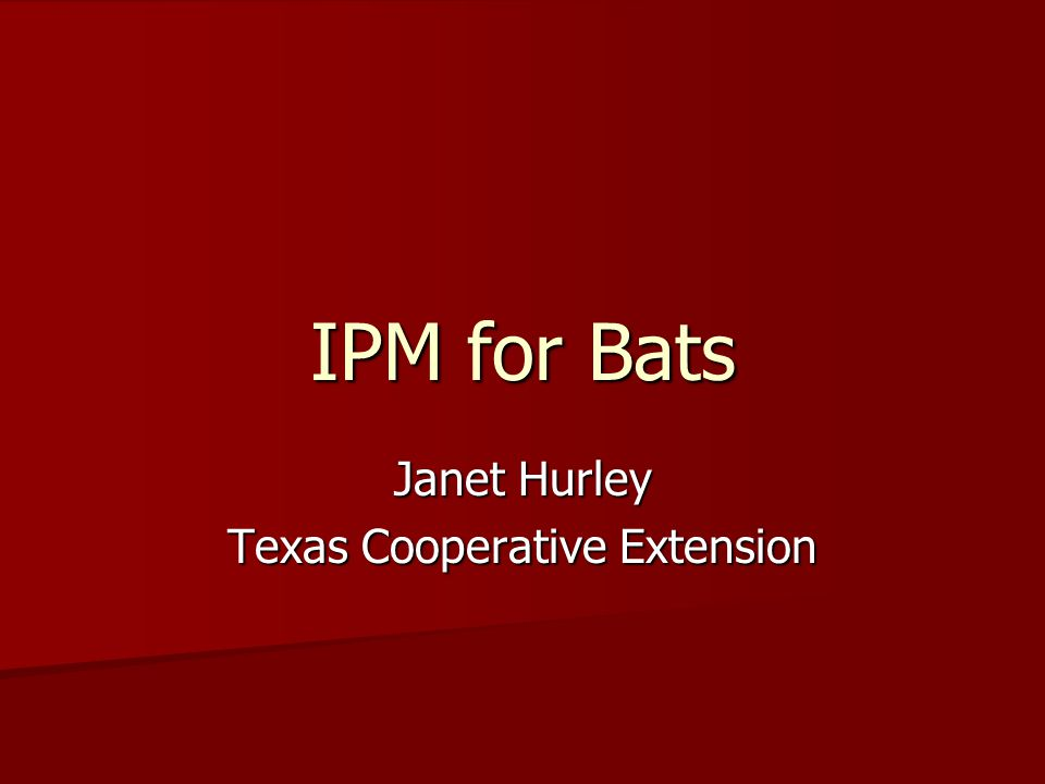 IPM for Bats Janet Hurley Texas Cooperative Extension