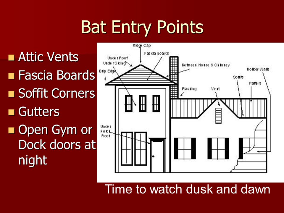 Bat Entry Points Attic Vents Attic Vents Fascia Boards Fascia Boards Soffit Corners Soffit Corners Gutters Gutters Open Gym or Dock doors at night Ope