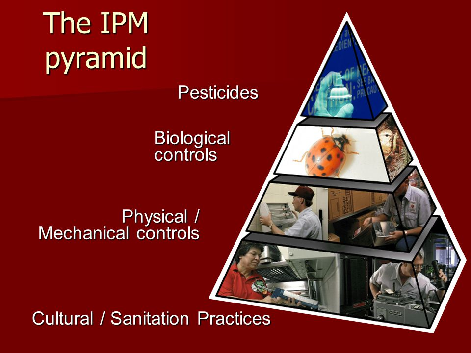 The IPM pyramid Pesticides Biological controls Physical / Mechanical controls Cultural / Sanitation Practices