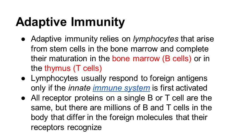 Adaptive Immunity ●Adaptive immunity relies on lymphocytes that arise from stem cells in the bone marrow and complete their maturation in the bone marrow (B cells) or in the thymus (T cells) ●Lymphocytes usually respond to foreign antigens only if the innate immune system is first activatedimmune system ●All receptor proteins on a single B or T cell are the same, but there are millions of B and T cells in the body that differ in the foreign molecules that their receptors recognize