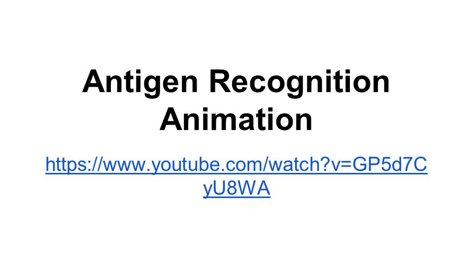 Antigen Recognition Animation https://www.youtube.com/watch?v=GP5d7C yU8WA