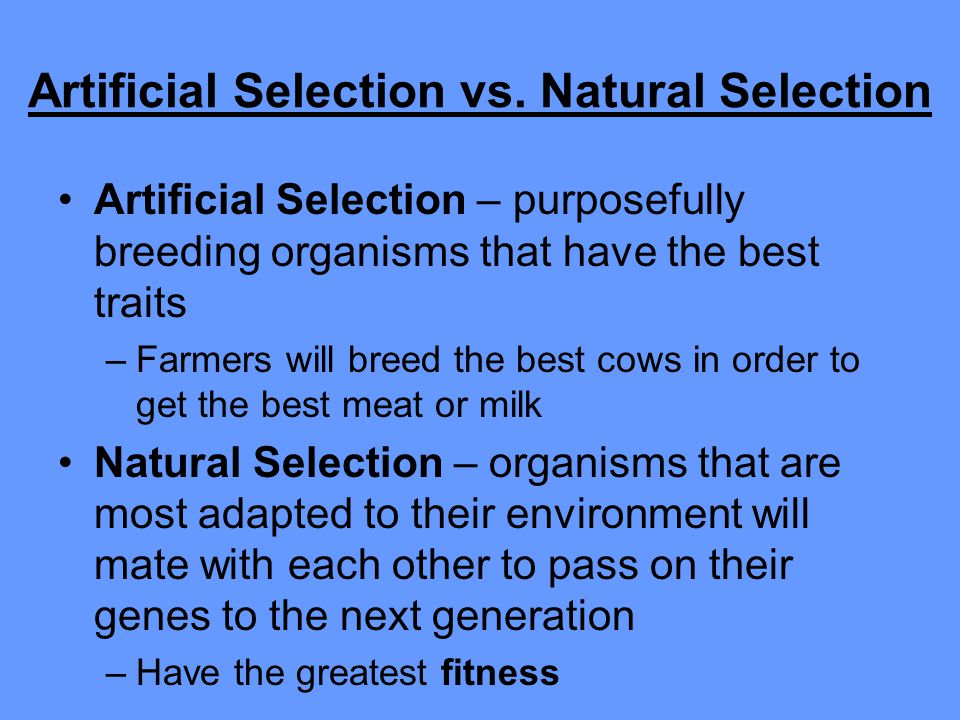 Artificial Selection vs. Natural Selection Artificial Selection – purposefully breeding organisms that have the best traits –Farmers will breed the be