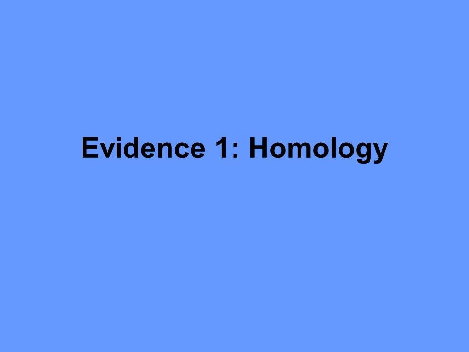 Evidence 1: Homology