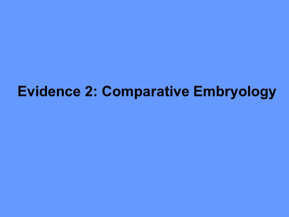 Evidence 2: Comparative Embryology