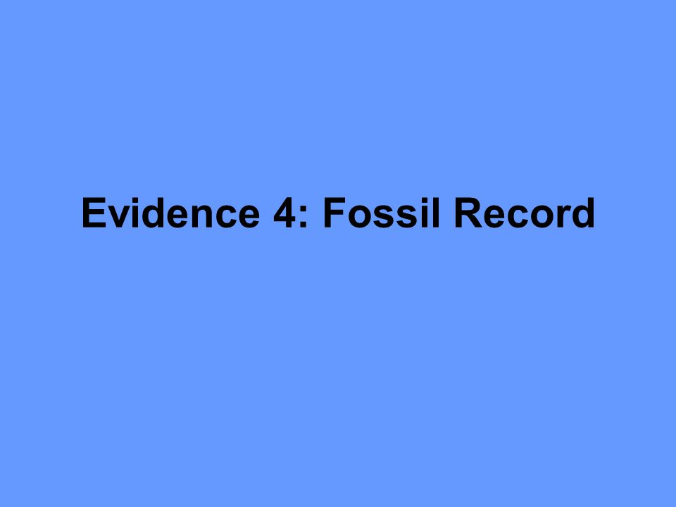 Evidence 4: Fossil Record