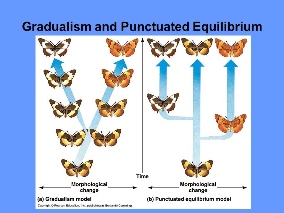 Gradualism and Punctuated Equilibrium