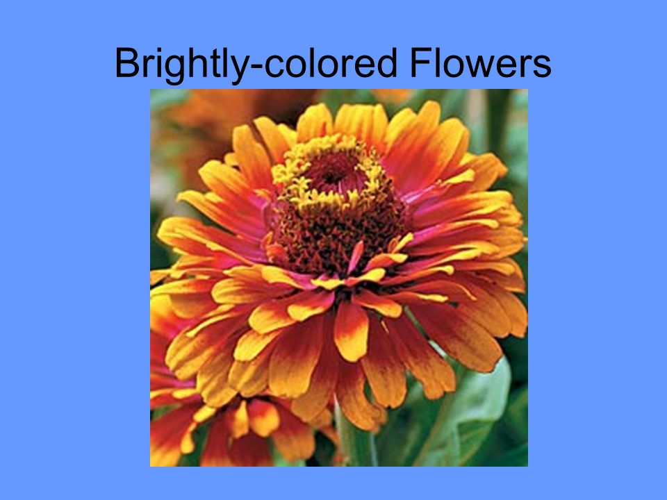 Brightly-colored Flowers