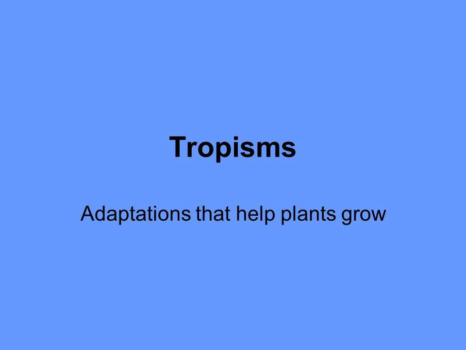Tropisms Adaptations that help plants grow