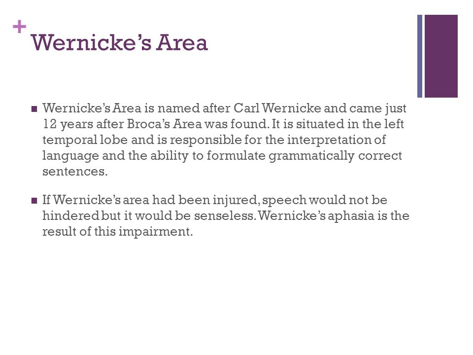 + Wernicke's Area Wernicke's Area is named after Carl Wernicke and came just 12 years after Broca's Area was found.