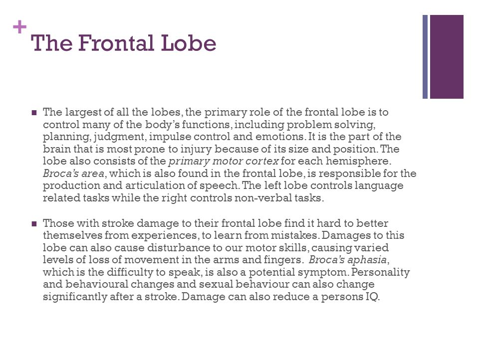 + The Frontal Lobe The largest of all the lobes, the primary role of the frontal lobe is to control many of the body's functions, including problem solving, planning, judgment, impulse control and emotions.