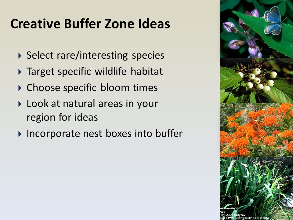Creative Buffer Zone Ideas  Select rare/interesting species  Target specific wildlife habitat  Choose specific bloom times  Look at natural areas