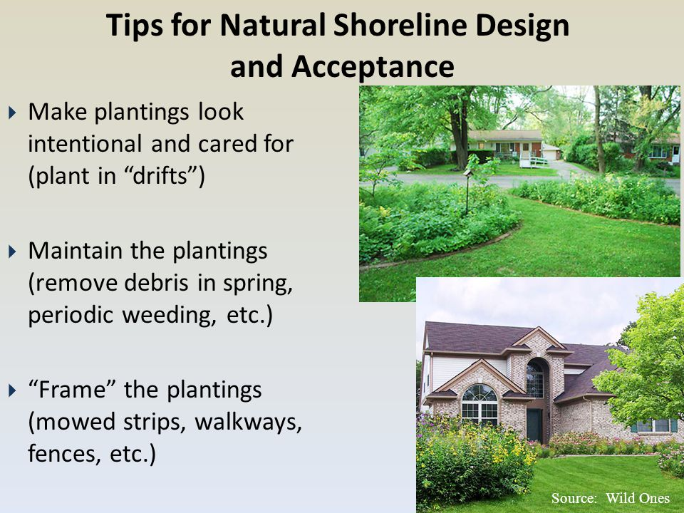 """Source: Wild Ones Tips for Natural Shoreline Design and Acceptance  Make plantings look intentional and cared for (plant in """"drifts"""")  Maintain the"""