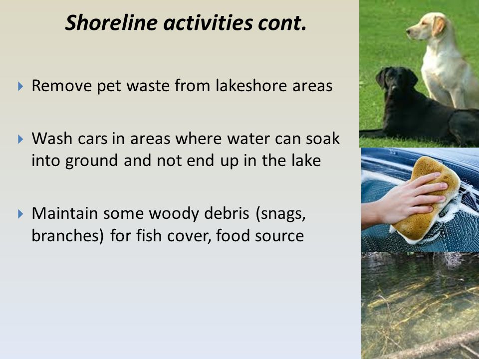 Shoreline activities cont.  Remove pet waste from lakeshore areas  Wash cars in areas where water can soak into ground and not end up in the lake 