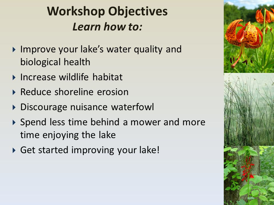 Workshop Objectives Learn how to:  Improve your lake's water quality and biological health  Increase wildlife habitat  Reduce shoreline erosion  D