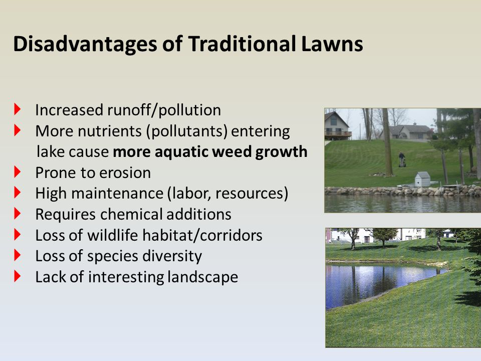  Increased runoff/pollution  More nutrients (pollutants) entering lake cause more aquatic weed growth  Prone to erosion  High maintenance (labor, resources)  Requires chemical additions  Loss of wildlife habitat/corridors  Loss of species diversity  Lack of interesting landscape Disadvantages of Traditional Lawns
