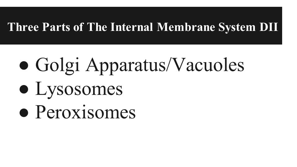 Three Parts of The Internal Membrane System DII ● Golgi Apparatus/Vacuoles ● Lysosomes ● Peroxisomes